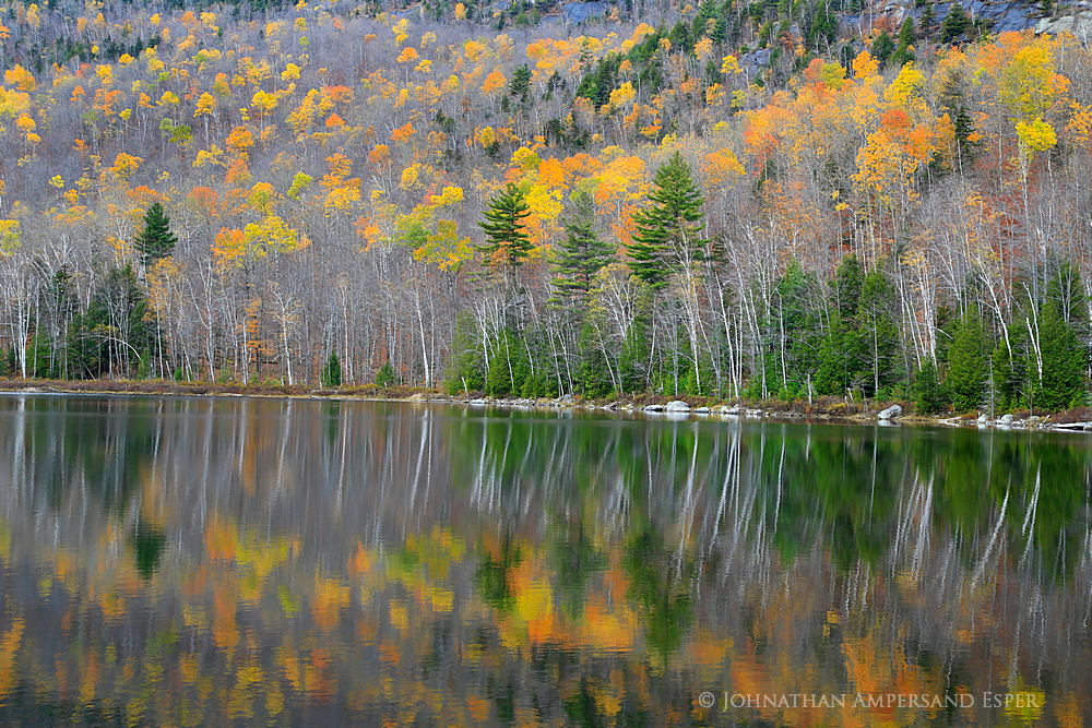 Round Pond,reflection,white birch,birches,larch,2014,fall,, photo