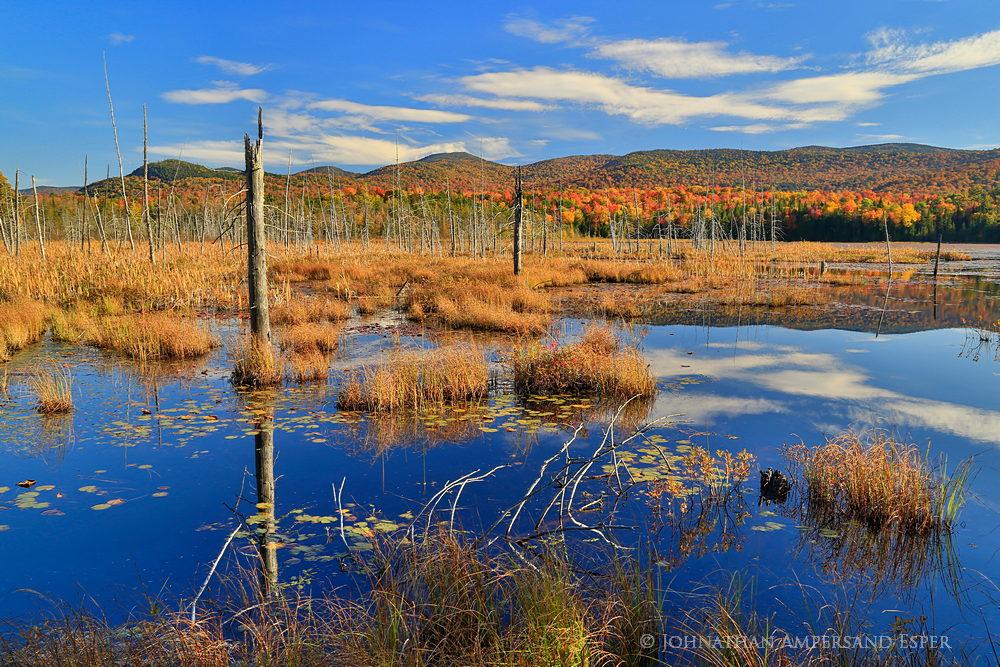 Shaw Pond,Long Lake,wetland,blue sky,sunny,autumn,2014,Shaw Pond sunny autumn day,bog,blue,, photo