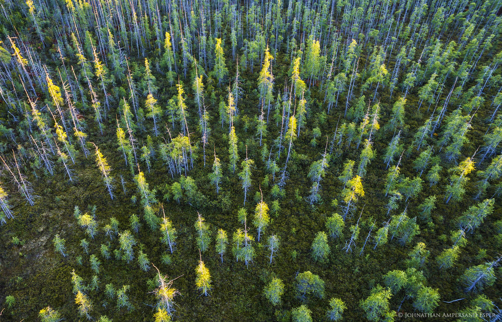Silver Lake Bog,Silver Lake,drone,aerial,pines,pine forest,sunset,last light,down,Adirondacks,Adirondack forest,Adirondack bog