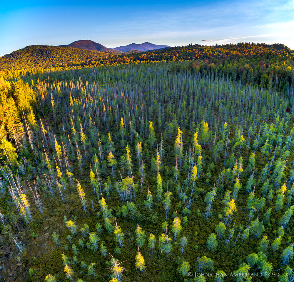 Silver Lake Bog, Whiteface Mt,Whiteface,bog,boreal forest,aerial,Silver Lake bog aerial,2016,September,last light,pine trees,drone,Adirondack,Adirondack Park,wetlands,, photo