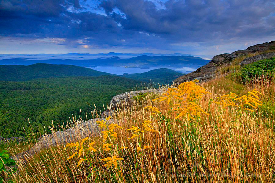 Adirondack Life,Adirondack Park,Lake George,Lake George Wild Forest,Sleeping Beauty,Sleeping Beauty Mt,goldenrod,, photo