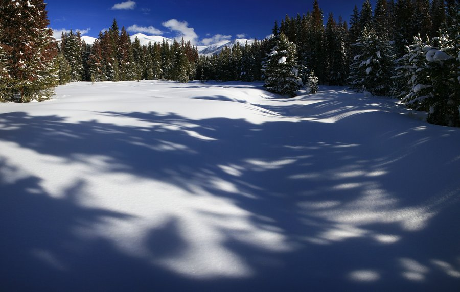 Continental Divide, Colorado, forest, pine, snowy, winter, tree, shadows, snow, on, Winter Park, photo