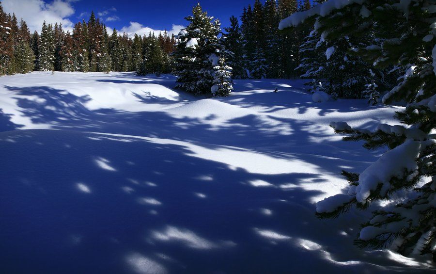 shadow, patterns, snowy, forest, pine trees, Winter Park, Colorado, winter, Continental Divide, photo