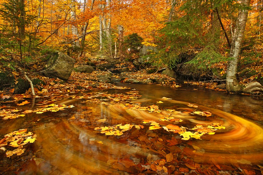 composite,Snowy Mountain,trail,stream,whirlpool,floating,leaves,fall,swirling,, photo