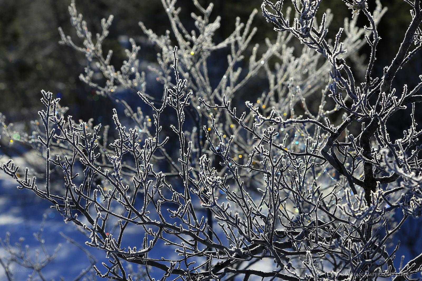 South Pond,South Pond Inlet,winter,ice crystals,sparkling,sparkling ice crystals,bush,