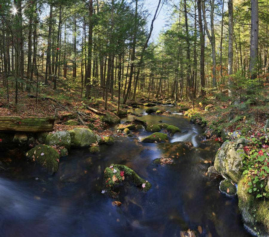 Spectacle Brook,Schroon Lake,Pharaoh Wilderness,Spectacle Pond Outlet,late,fall,brook,stream,leaves,square, photo