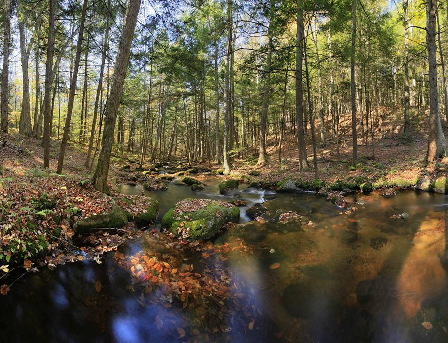 Spectacle Brook,fall,submerged leaves,brook,stream,Adirondack Park,Pharaoh Wilderness Area, Spectacle Pond Outlet,, photo