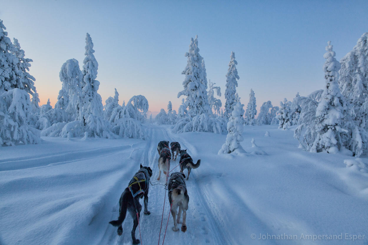 Dogsledding near Kiruna, Sweden, while on a 10 day trip in -30 to -20 degree C temperatures.