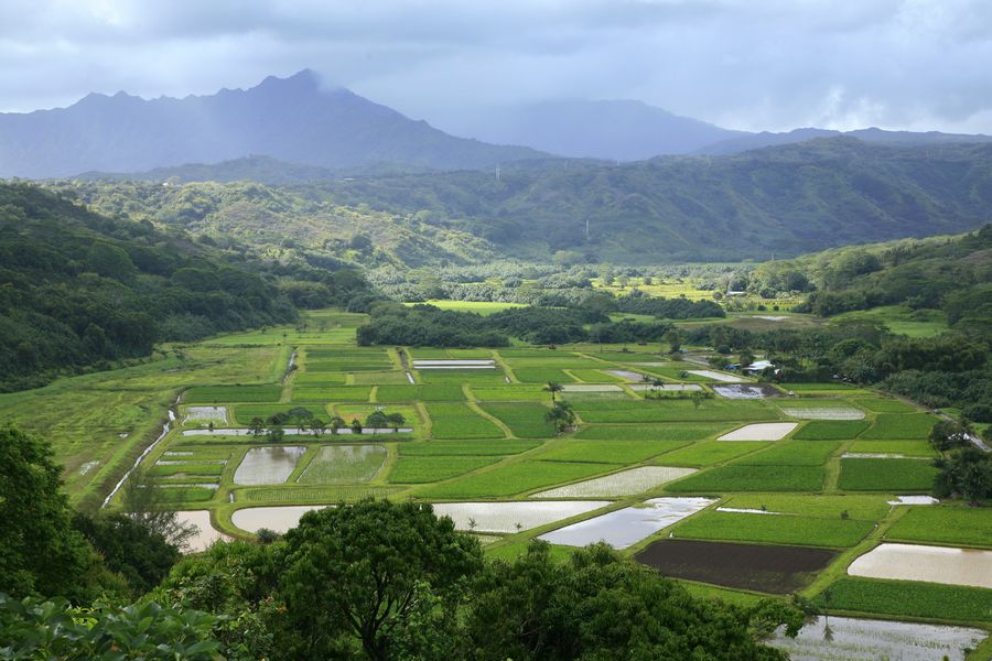 taro, fields, Hanalei, valley, Kauai, Hawaii, photo
