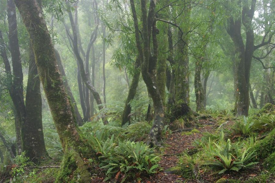 Te Urewera National Park, trail, forest, cloudy, misty, photo