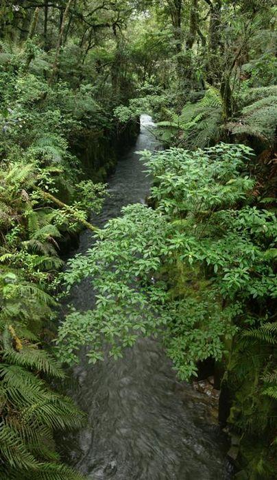 Te Whaiti Nui a Toi Canyon, Whirinaki Forest Park, New Zealand, photo