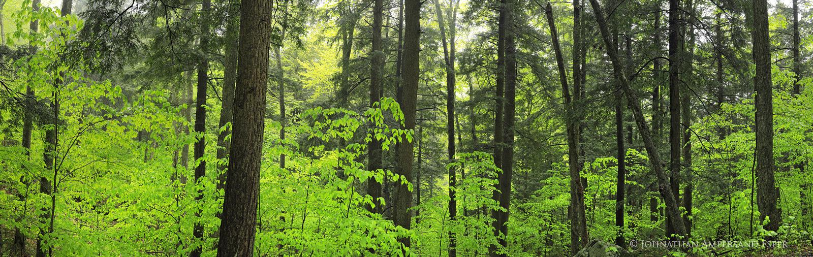 Tenent Creek,Hope Falls,rainy,wet,spring,panorama,forest,pine,rainy forest,pine forest,spring forest,Johnathan Esper,Adirondack...