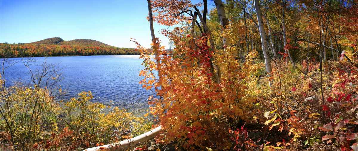 Thirteenth Lake, fall, autumn, color, forest, white birch, birches, shore, sunny, warm, Adirondacks, North River, photo
