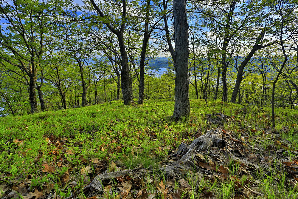 Lake George,Tongue Range,Tongue Mt,Tongue Mountain,springtime,May,2015,Johnathan Esper,Adirondack Park,Adirondacks,First Mt,forest,sunny,oaks,oak forest,Adirondack, photo