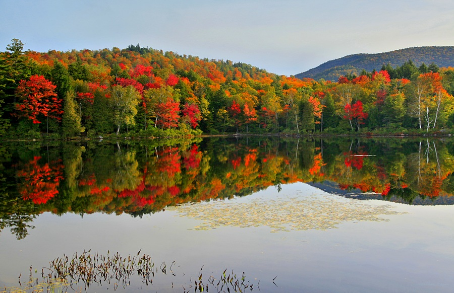 Mt Morris,Tupper Lake,bog,reflection,fall,foliage,autumn,Litchfield Park,lily pads,, photo