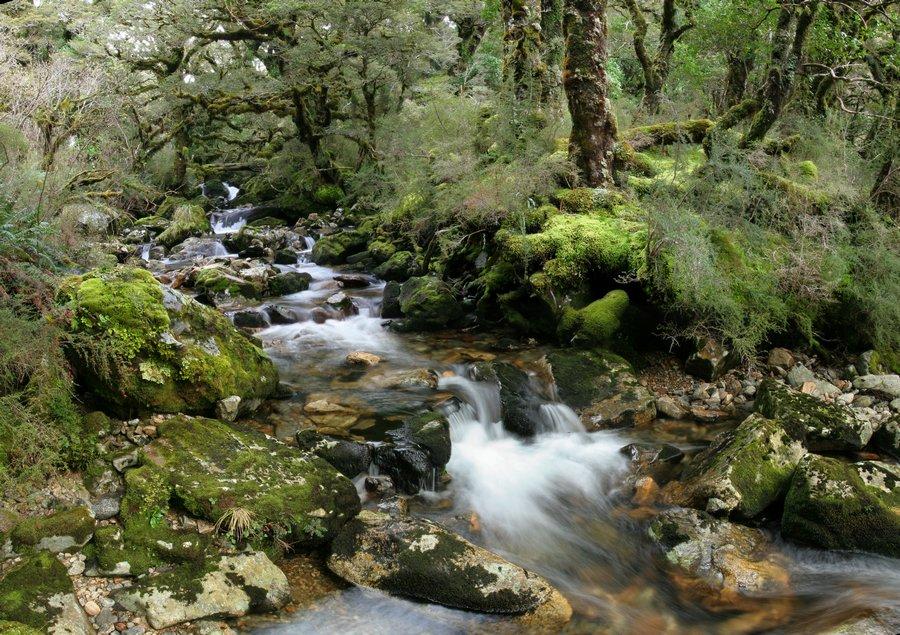 Upper Spey River, Spey River, Fiordland National Park, Dusky Track, rainforest, stream, mossy, lush, temperate, wilderne, photo
