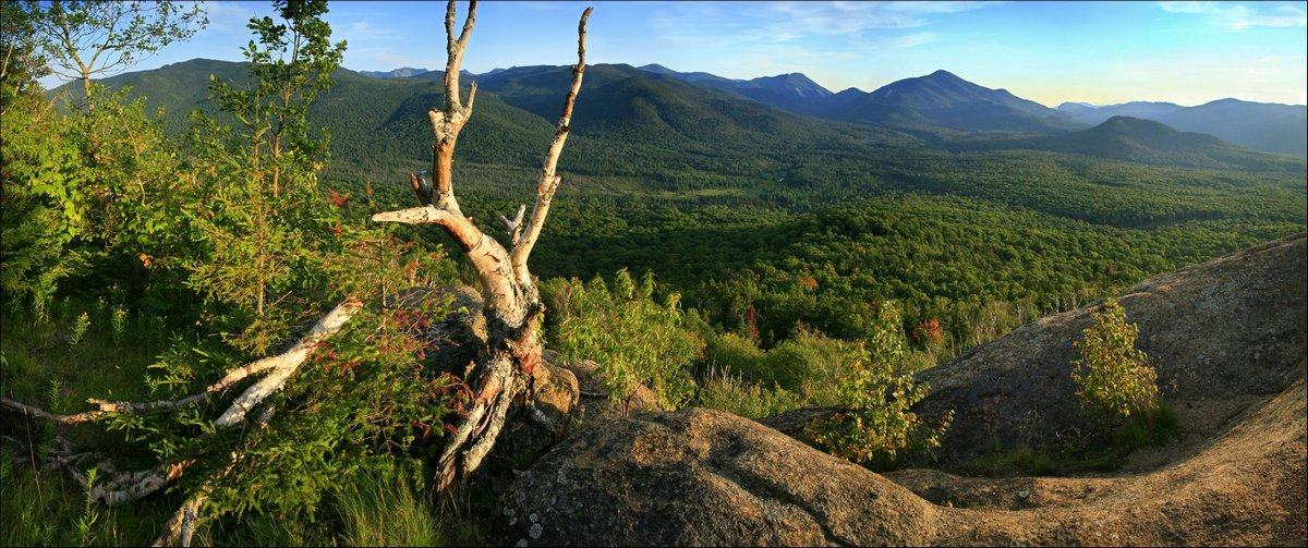 Mt. Van Hoevenberg,Mt Van Hoeveberg,view,High Peaks,Adirondack,Adirondack Park,mountains,panorama,old,white,birch,tree,w, photo