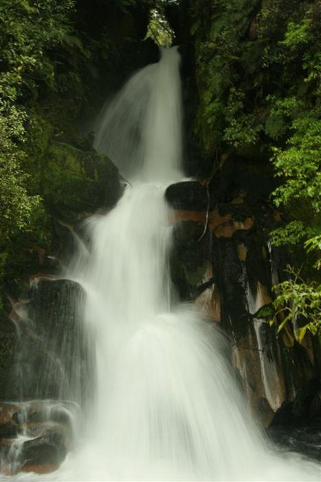 waterfall, Whirnaki Forest Park, New Zealand, stream, photo