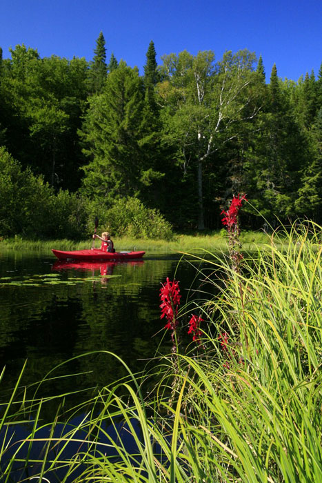 kayaker,red,kayak,wildflowers,Adirondacks,Adirondack,Adirondack Park,kayacking,New York State,, photo