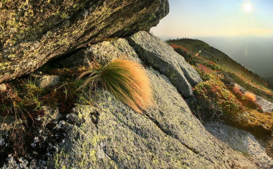 Wright Peak, alpine, environment, vegetation, grasses, High Peaks, range, mountains, Adirondacks, Adirondack Park, summi, photo