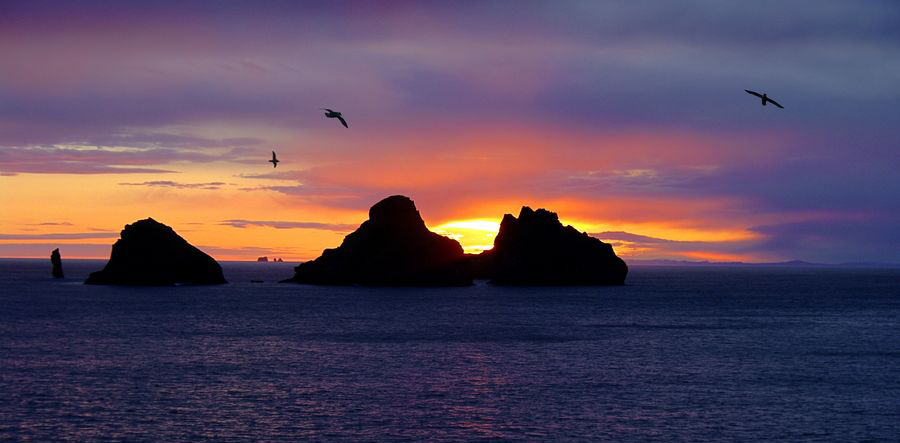 Vestmanneyjar,Iceland,Westmann Islands,sea gulls,sea stacks,sea,sunset, photo