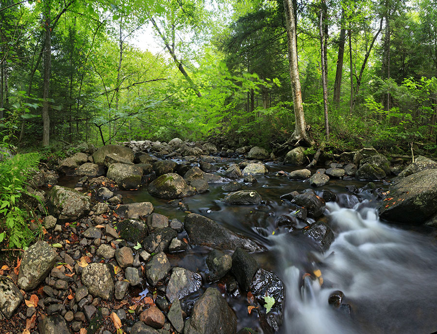 Wilmington Notch,stream,forest,Owen Pond,Owen Pond outlet, photo