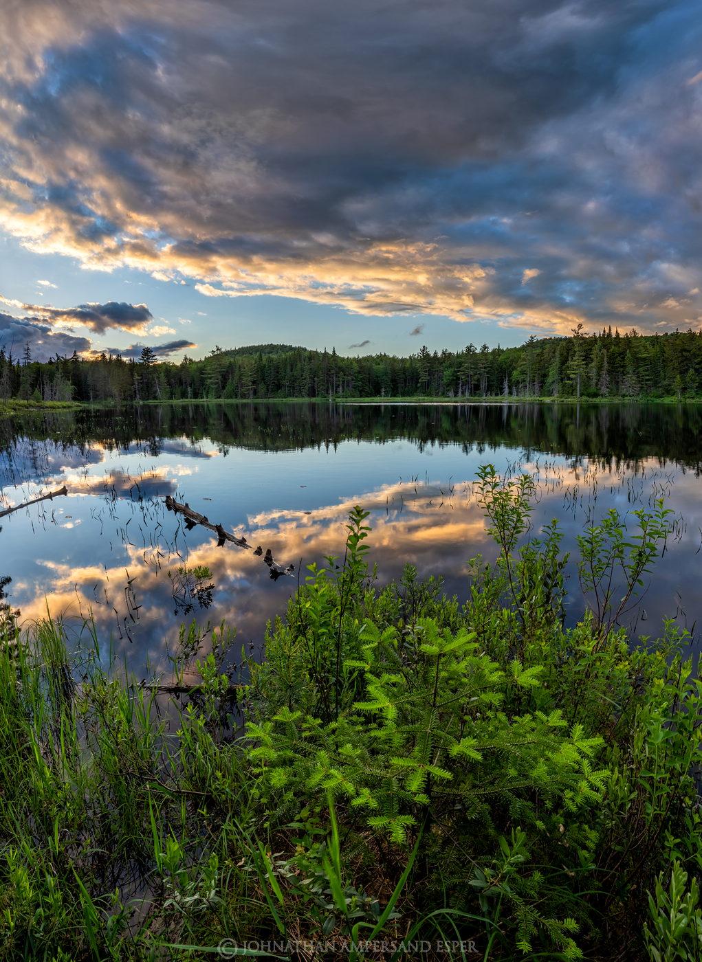 Buck Mt bog,bog,wetland,summer,sunset,